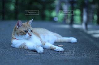 猫,夏,動物,ペット,休憩,人物,日陰,ネコ