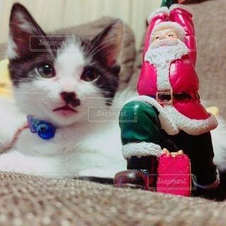 猫の写真・画像素材[37791]