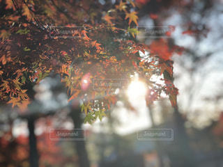 木のぼやけた写真の写真・画像素材[912721]