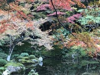 紅葉,京都,南禅寺