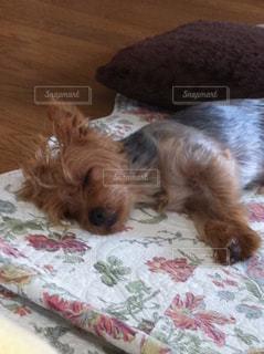 犬の写真・画像素材[473144]