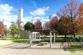 ツリーの横にある空の公園ベンチの写真・画像素材[884676]
