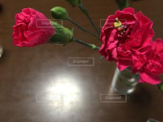 花の写真・画像素材[485712]