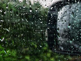 雨の写真・画像素材[835377]