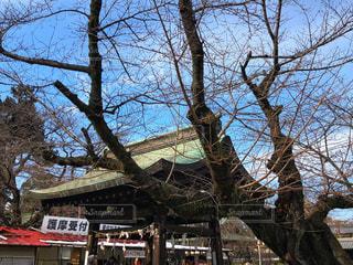 大きな木の写真・画像素材[996456]