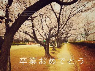 桜の写真・画像素材[1092204]