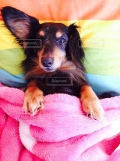 犬の写真・画像素材[11278]