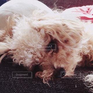 犬の写真・画像素材[488761]