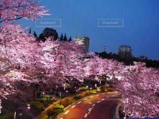 春の写真・画像素材[408616]