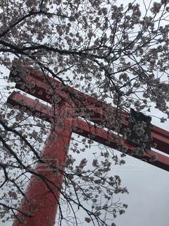 春 - No.421115