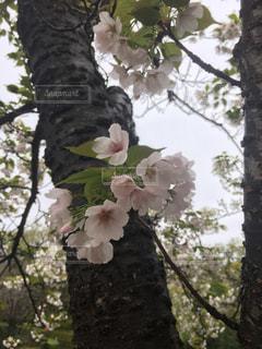 春 - No.425332