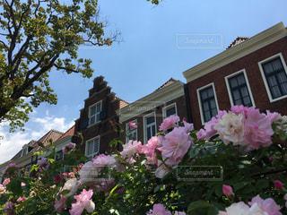バラ,薔薇,長崎,ハウステンボス