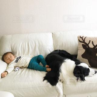 犬,寝顔,お昼寝,ボーダーコリー,犬と赤ちゃん,お家でまったり