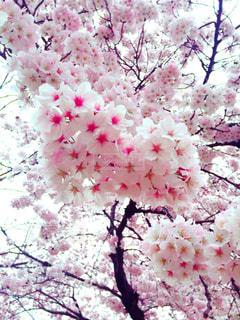 春の写真・画像素材[408546]