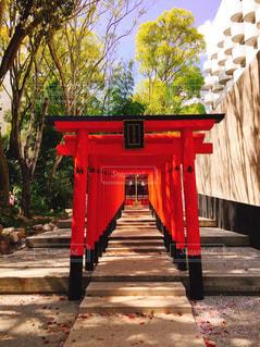 神社の写真・画像素材[553007]