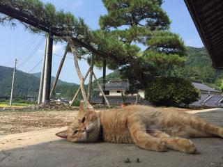お昼寝猫ちゃんの写真・画像素材[750543]
