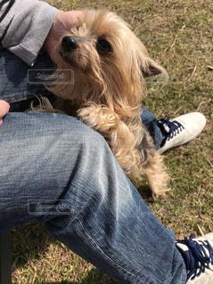 犬を持っている人の写真・画像素材[1222204]