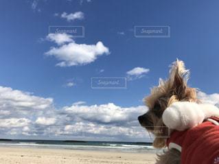 そらと海と青空の写真・画像素材[1222228]
