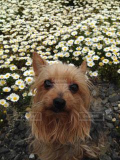 花畑とそらの写真・画像素材[1225153]