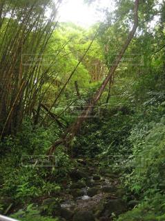 滝までの道,ハワイ島滝