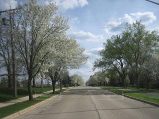イリノイ州 シカゴシャンバーグ,アメリカシカゴの春