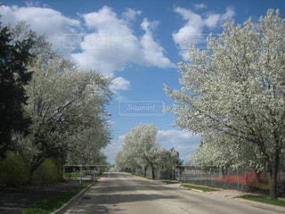 イリノイ州シカゴの春