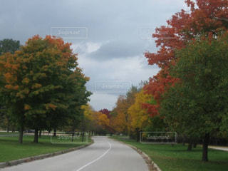 イリノイ州シカゴ秋の公園