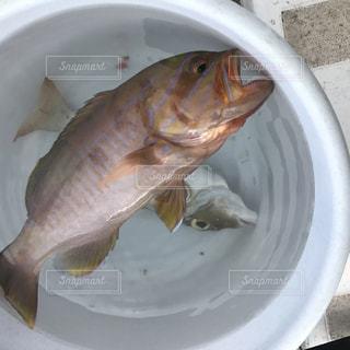 魚 - No.468261