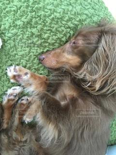 犬の写真・画像素材[473799]