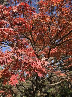 大きな木の写真・画像素材[846307]