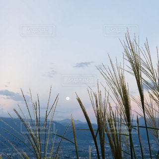 水の体の横にあるヤシの木のグループの写真・画像素材[1465877]