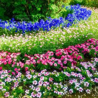 花の写真・画像素材[1154681]