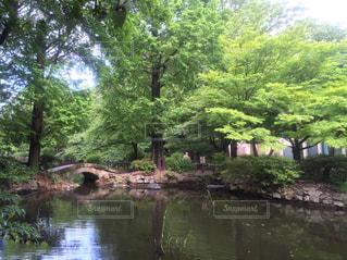 井の頭恩賜公園 - No.1160595