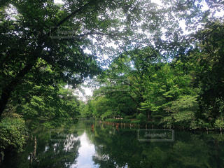 井の頭公園 - No.1160705
