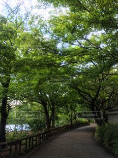 散歩 - No.1161651