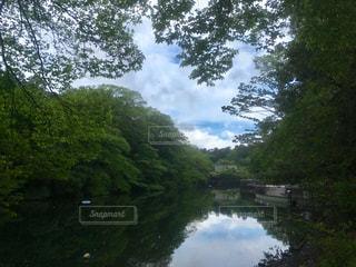 井の頭公園 - No.1162476