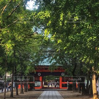 葛飾八幡宮 - No.1162991
