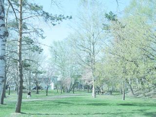 緑の写真・画像素材[466058]