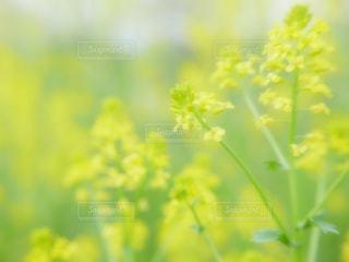 黄色の写真・画像素材[595952]