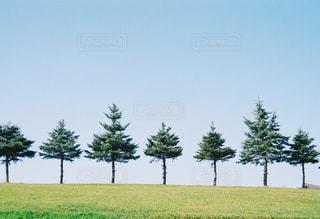 背景の木と大規模なグリーン フィールドの写真・画像素材[1218176]