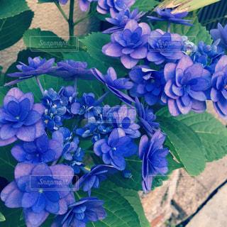 花の写真・画像素材[537639]