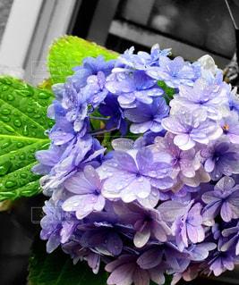 花の写真・画像素材[537645]