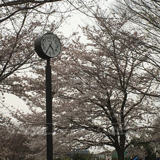 春 - No.426657