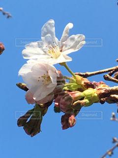春の写真・画像素材[408592]