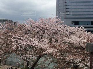 春の写真・画像素材[408604]