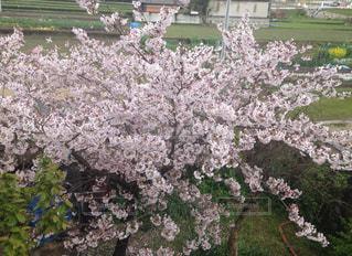春の写真・画像素材[413609]