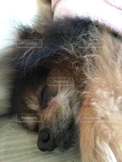 犬の写真・画像素材[475490]