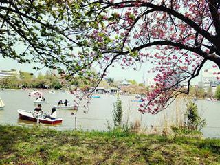 春,スカイツリー,上野,不忍池