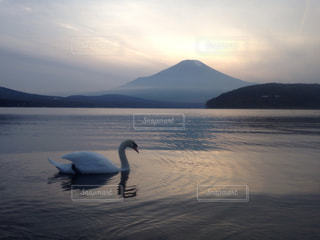 風景,夕日,富士山,湖,山,景色,白鳥,サンセット,山梨県,日本一,山中湖,mt.fuji