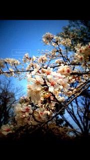 春の写真・画像素材[410434]